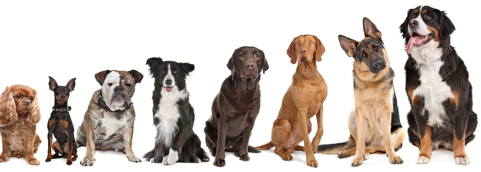 Picture of eight dogs