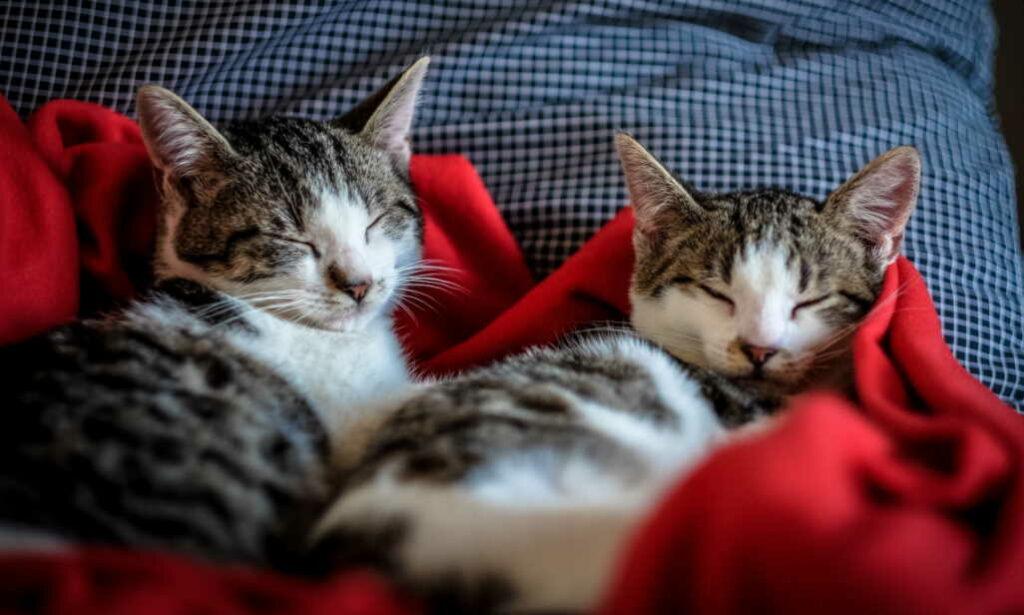 Happy Sleepy Cats